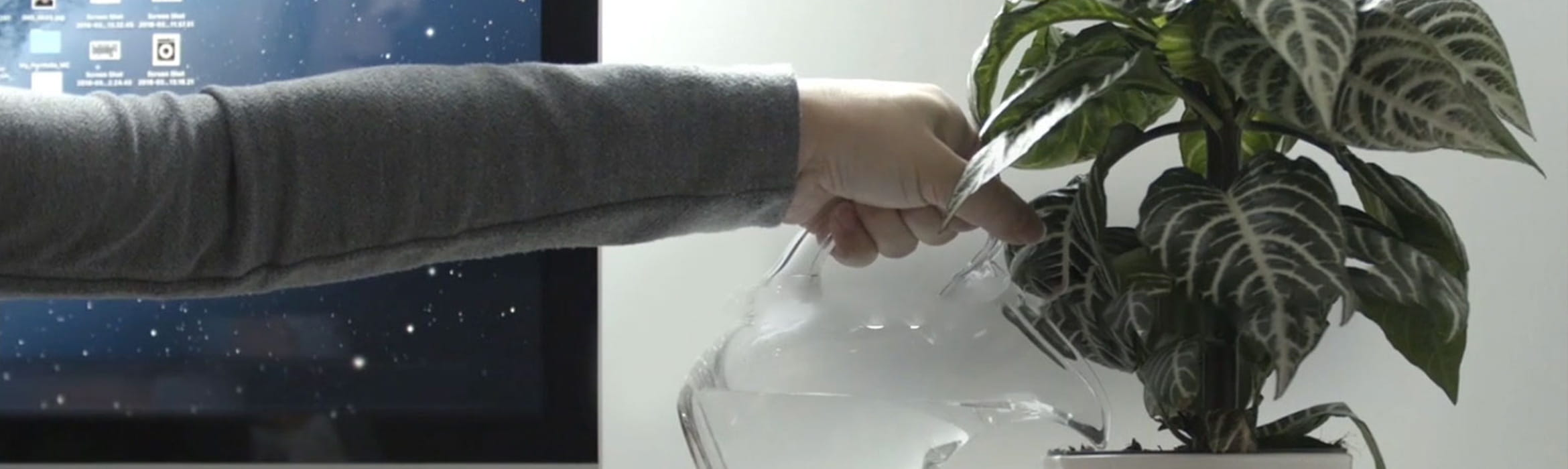 Person watering plant
